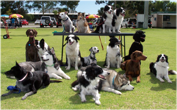 Dogswest group of dogs